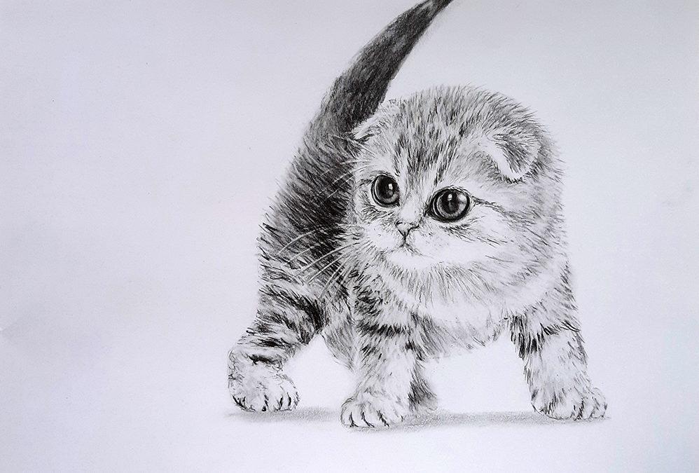 Как нарисовать котенка поэтапно карандашом
