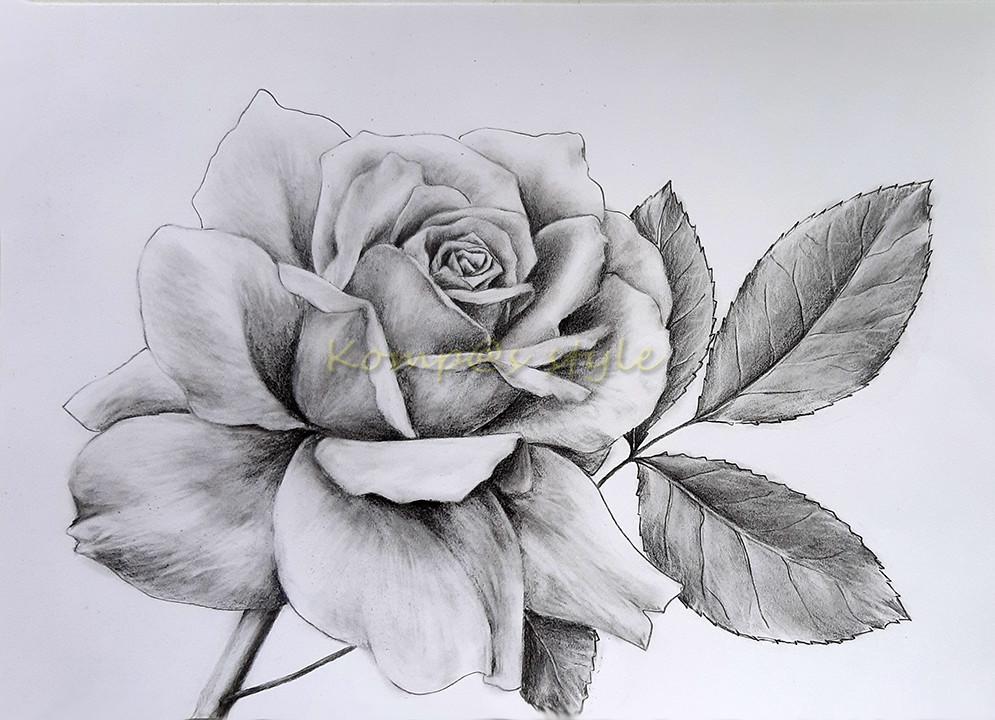 нарисовать розу карандашом поэтапно