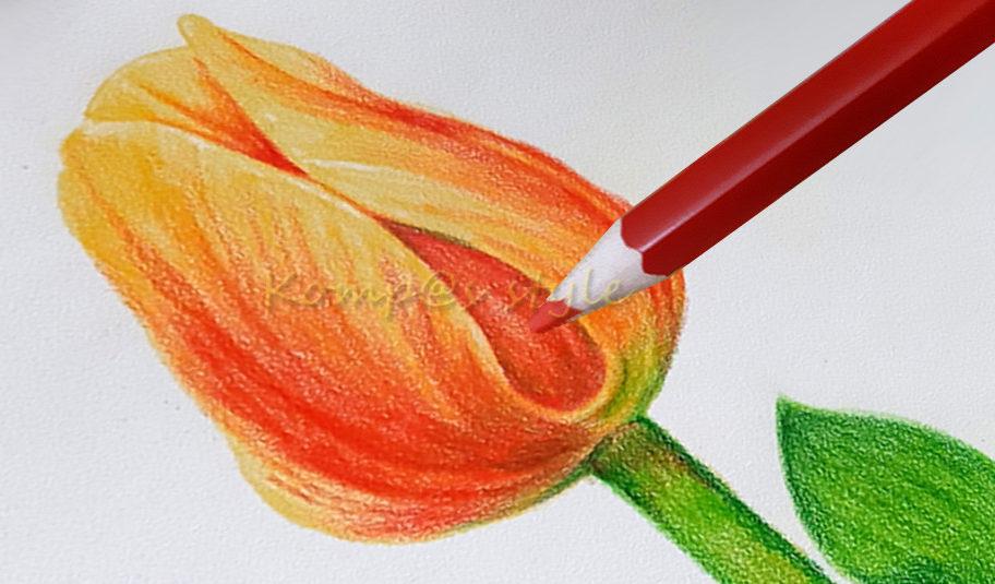 нарисовать тюльпан легко и красиво поэтапно