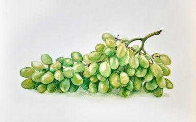 Как нарисовать виноград акварелью