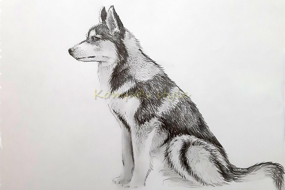 Нарисовать собаку Хаски карандашом
