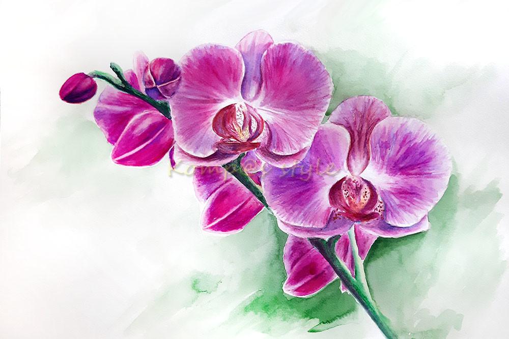 Как нарисовать орхидею акварельными карандашами
