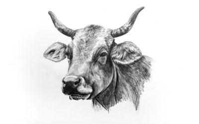 Как нарисовать быка карандашом