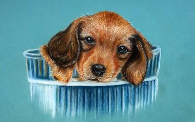 Как нарисовать собаку пастелью